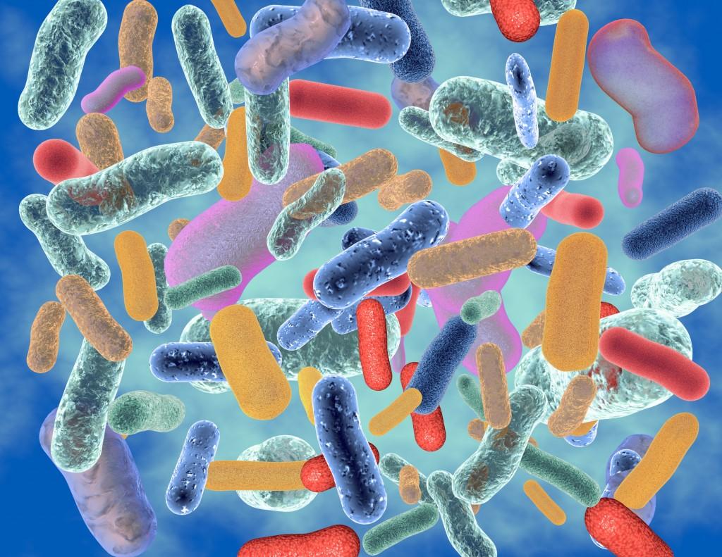 Lactobacillus and candida